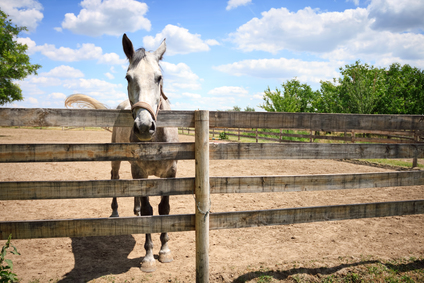 Fence Repair – Give Your Farm A Fresh Look 2 - Horse on a Fence